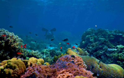The Status of Coral Reefs in Indonesia 2019