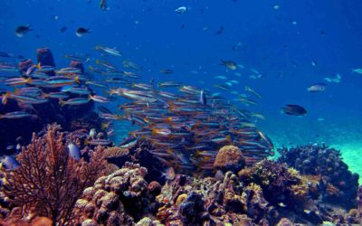 The Status of Coral Reefs' Anthropogenic Stressors in Indonesia 2019