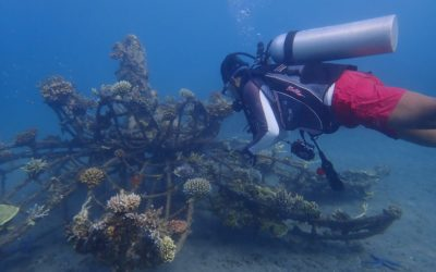 BIOROCK SAVES BLEACHING CORALS AGAIN